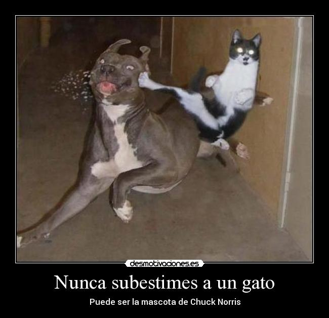 desmotivaciones gato pega perro