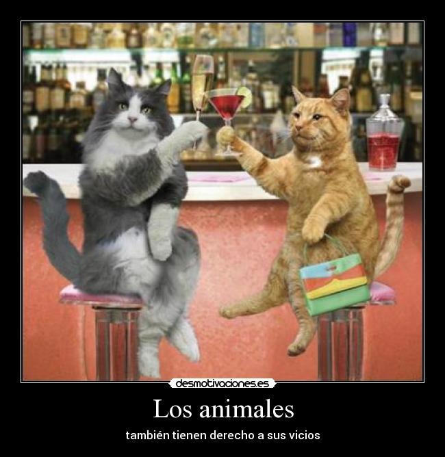 carteles animales animales desmotivaciones