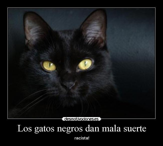Los gatos negros dan mala suerte desmotivaciones - Los peces traen mala suerte ...