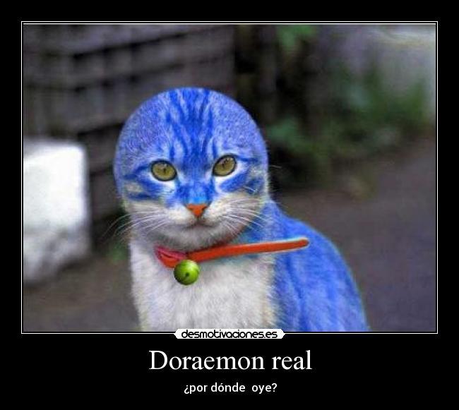 Doraemon Real: Desmotivaciones