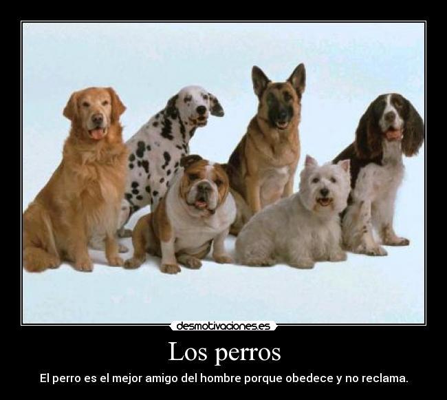 Las mascotas (perros y gatos)