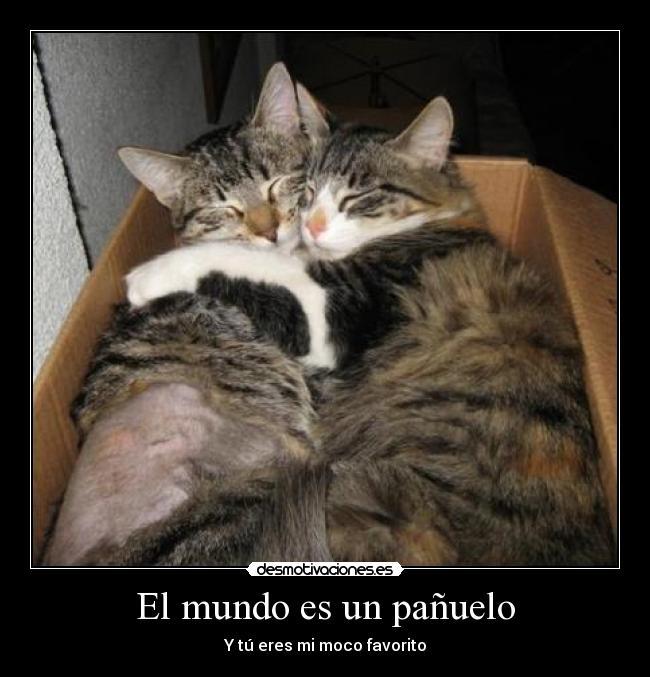 Imagen Sobre Memes Divertidos De Renata Paola En Citas Meme Gato
