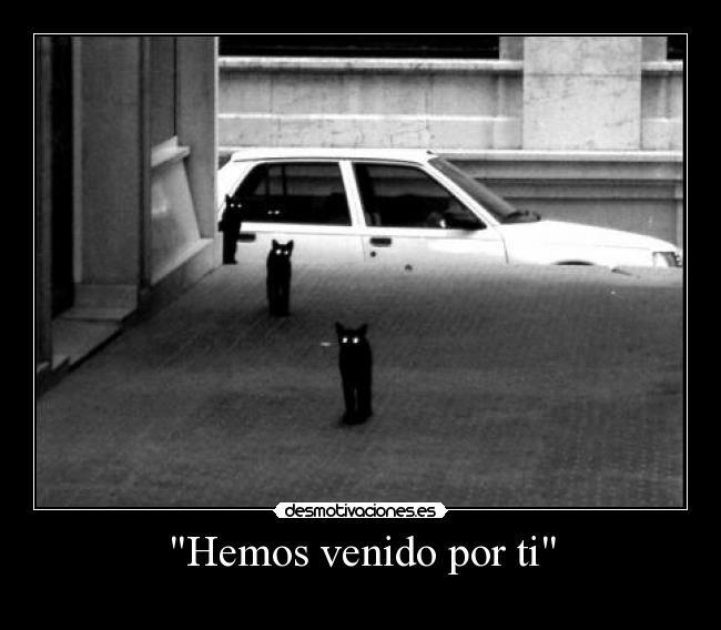 Смешно ми е Cats_314