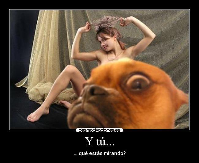 Смешно ми е Perro_inoportuno