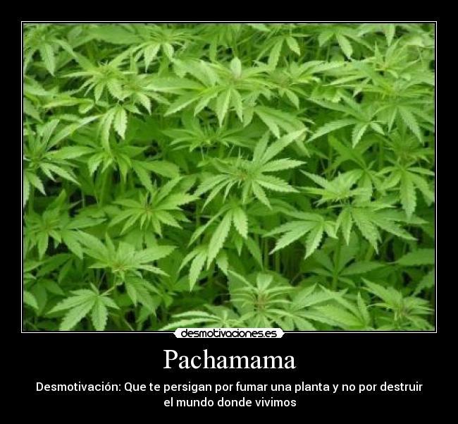 carteles pachamama legalizacion marihuana desmotivaciones