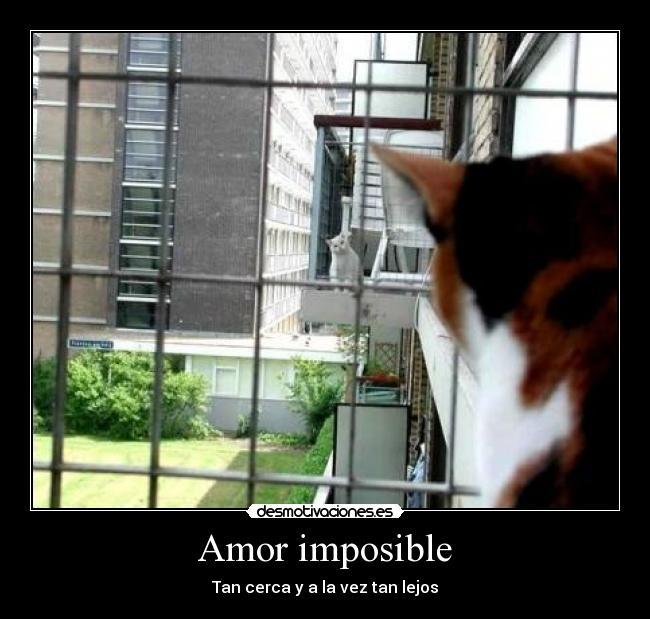 carteles amor imposible amor imposible cerca lejos g00n desmotivaciones
