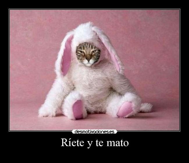 http://desmotivaciones.es/demots/201011/gato57_1.jpg
