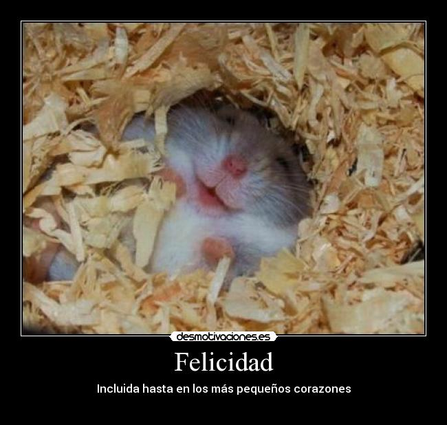 hamster cachondo: