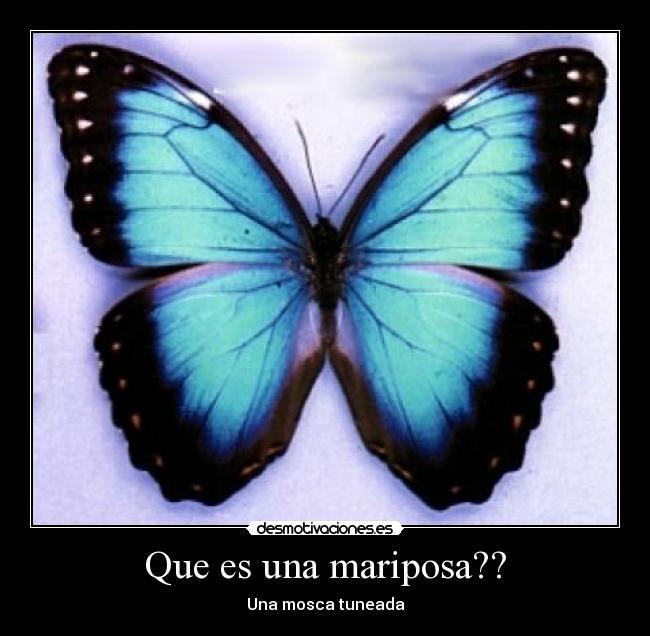 Mariposas De Amor Related Keywords & Suggestions - Mariposas De Amor ...