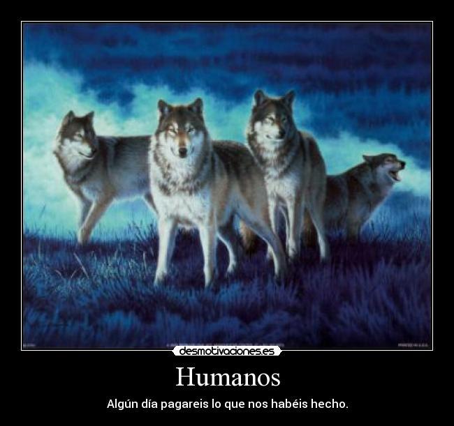 Malditos humanos prácticamente nos han extinguido. Rinoceronte Blanco del Norte. 1243876450198_f