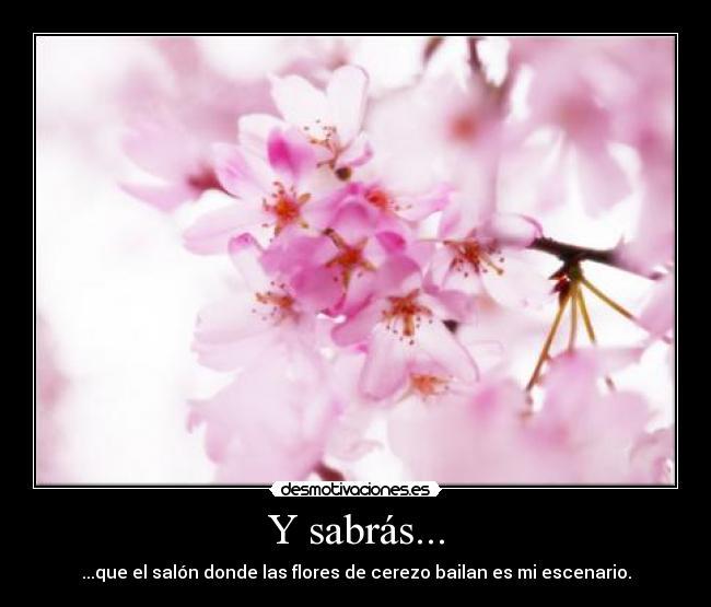 sakura sai momentos con tus amigos animes valioso flores del cerezo