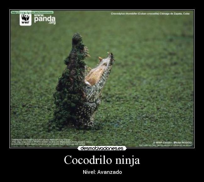 Cocodrilo ninja | Desmotivaciones