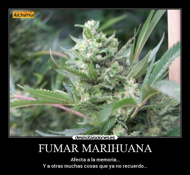 Frases sobre la marihuana - Portal informativo con