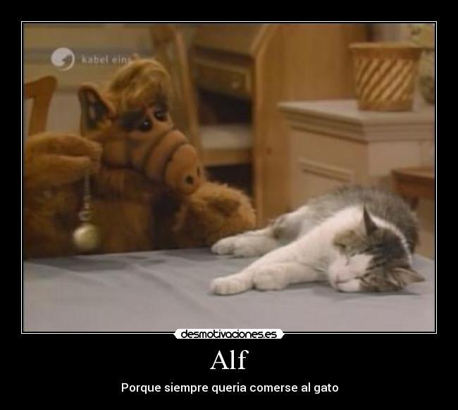 image. alg,gato