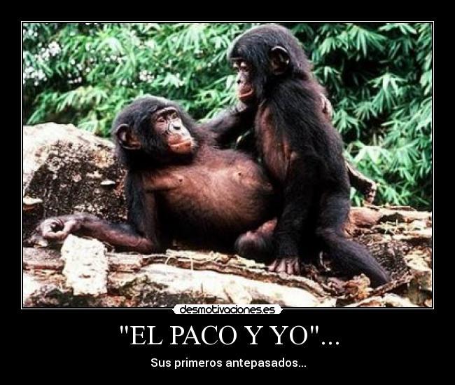 bonobo-seks-video