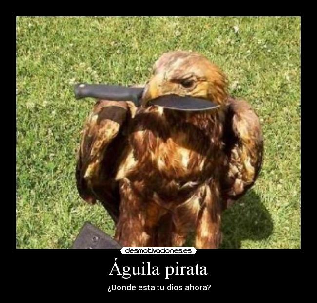 carteles aguila pirata desmotivaciones