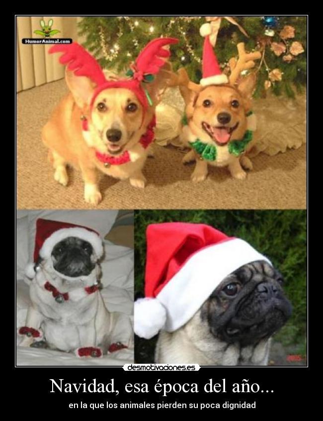 carteles navidad navidad animales dignidad desmotivaciones