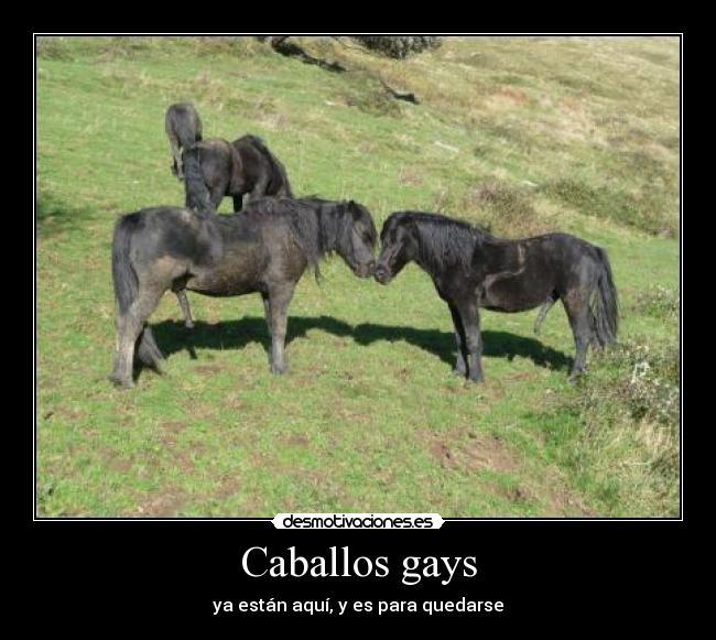 chatrondom caballos gay