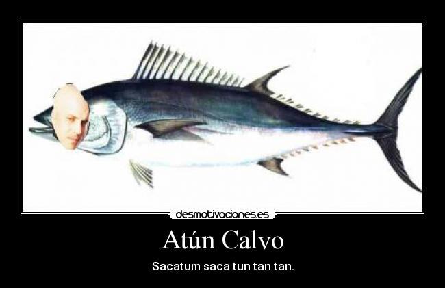 CALVO calvoes  Instagram photos and videos