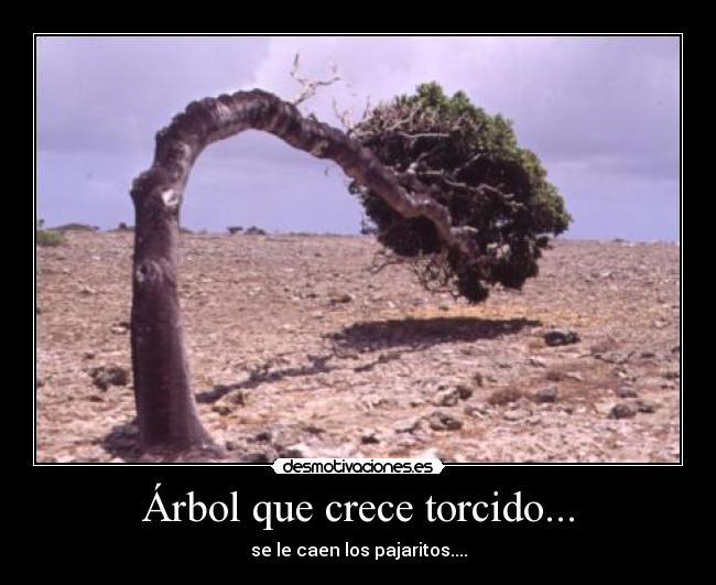 Arbol que nace torcido jamas su rama endereza yahoo dating 3