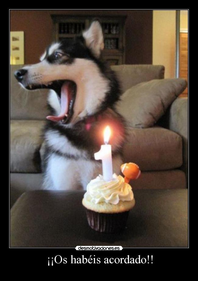 carteles cumpleanos perro tarta feliz alegre desmotivaciones