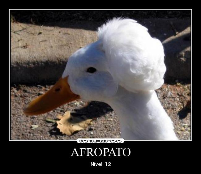 AFROPATO -