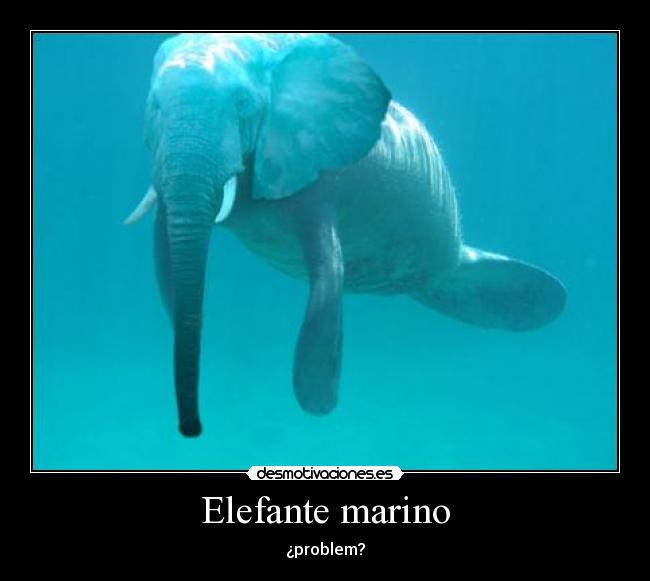 Elefante marino  Desmotivaciones