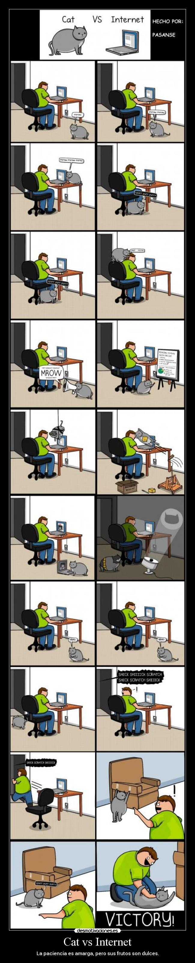 Cat vs Internet -