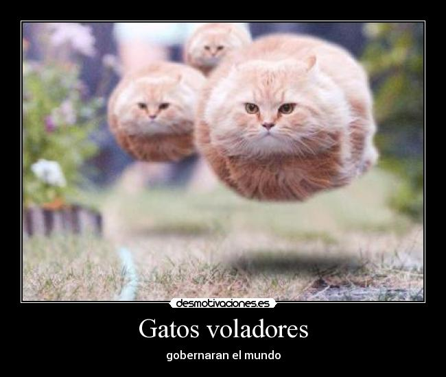 El Amor Es Engordar Juntos Gatos Gatitos Pictures to pin on Pinterest