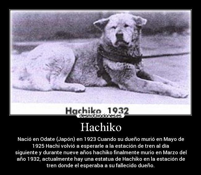 O Akita Hachiko Hachiko | Desmotivacio...
