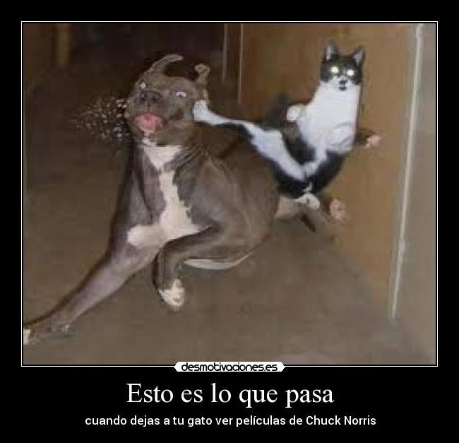 Esto es lo que pasa carteles gato desmotivaciones