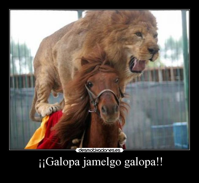 El juego de las palabras encadenadas-http://img.desmotivaciones.es/201101/lionhorse.jpg