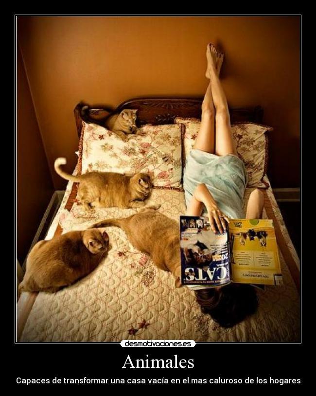 carteles animales gatosmascotas hogar casa vacia calor zorra implakable desmotivaciones