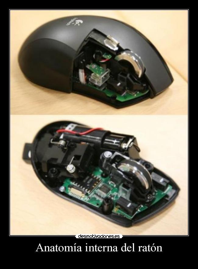 Anatomía interna del ratón | Desmotivaciones