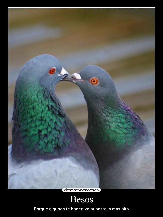 carteles besos besos palomas zorra implakable volar motivacion desmotivaciones