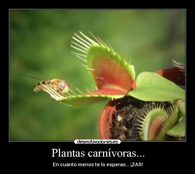 Plantas Carnivoras Related Keywords & Suggestions  Plantas Carnivoras