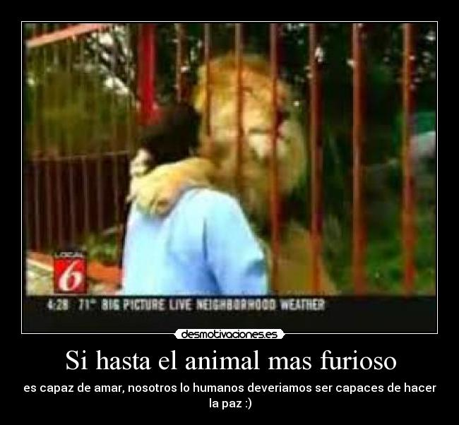 Si hasta el animal mas furioso -