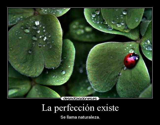 carteles perfeccion naturaleza mariquita zorra implakable desmotivaciones
