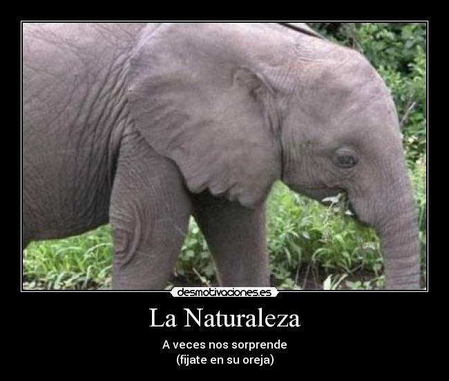 La-Naturaleza
