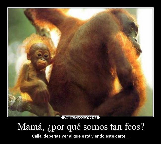 Monos feos - Imagui