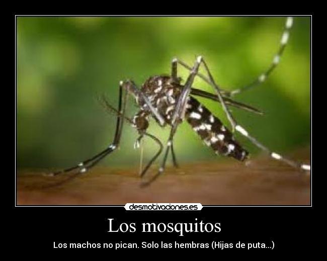 http://desmotivaciones.es/demots/201102/Mosquito.jpg