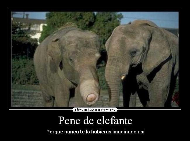 carteles pene elefante desmotivaciones