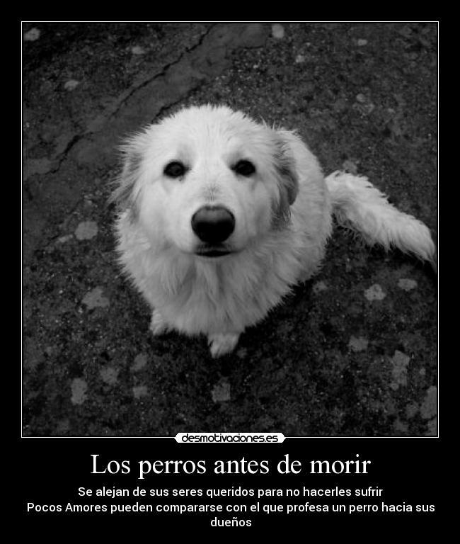 carteles los perros antes morir desmotivaciones