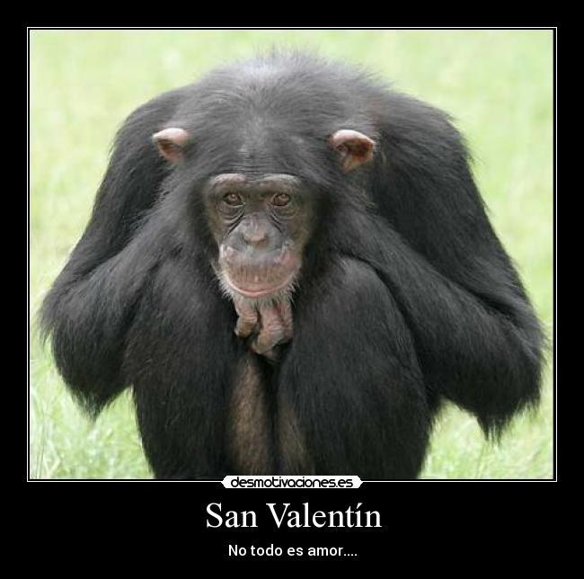 San Valentín Desmotivaciones