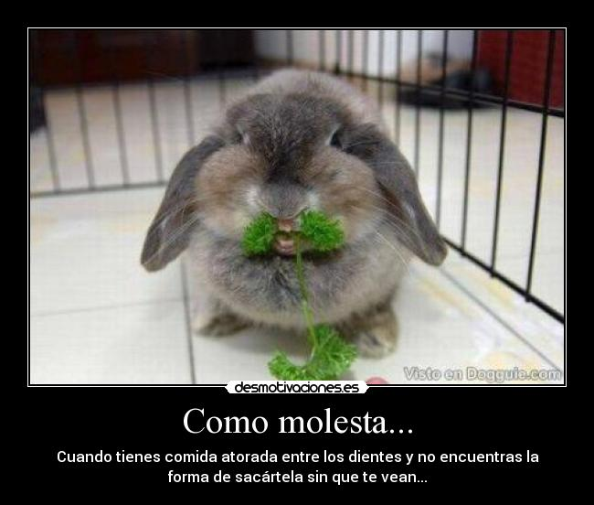 carteles comida conejos molesta desmotivaciones