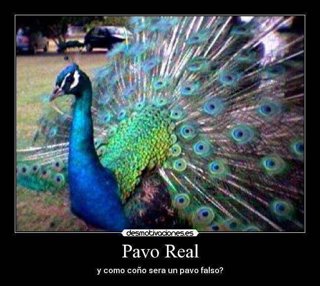 Im genes y carteles de pavo pag 11 desmotivaciones - Fotos de un pavo real ...