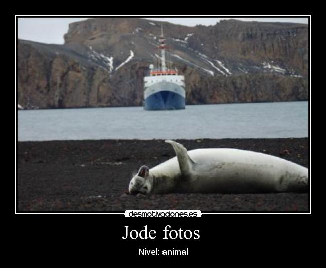 Jode fotos  - Nivel: animal