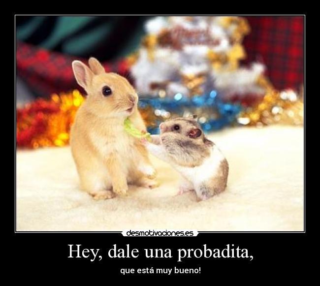 Imágenes, Carteles y Desmotivaciones de conejo tierno hamster animal