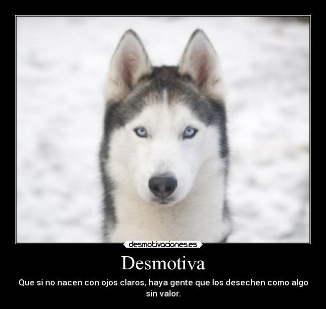 carteles mascotas amor vida perros animales hogar amigo triste desmotivaciones