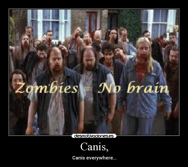 Canis, - Canis everywhere...